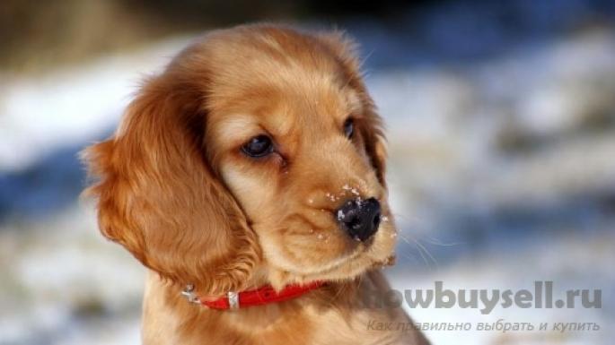 Как выбрать ошейник для собаки?