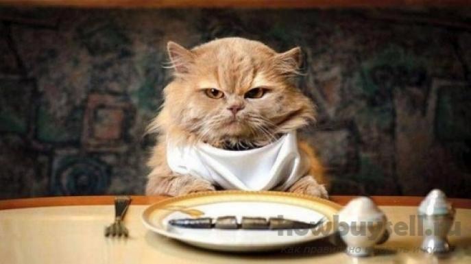 Как выбрать витамины для кошек?