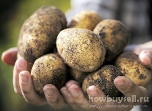 Как выбрать лучшую картошку?