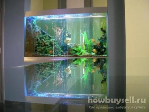 Какой аквариум лучше выбрать для дома или офиса новичкам?