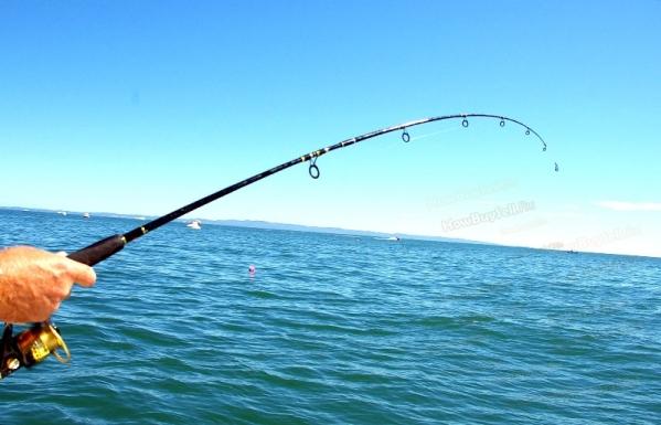 8 лучших лесок для рыбалки