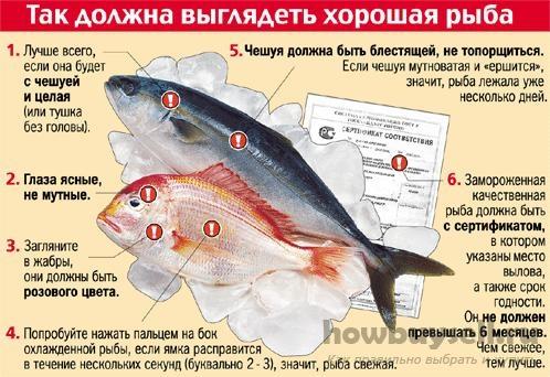 Как выбрать качественную рыбу, без паразитов