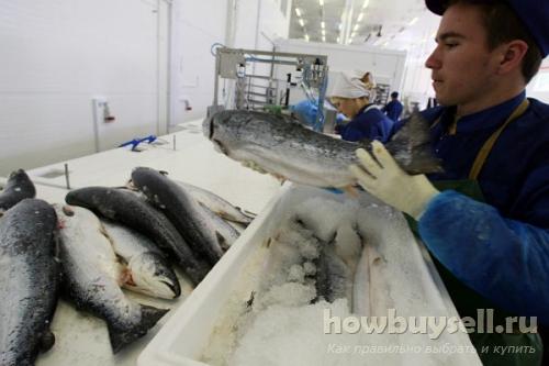 Рыба с фермы или из океана