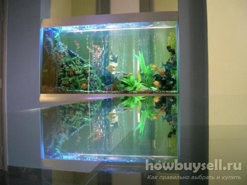 Какой аквариум лучше выбрать для дома или офиса новичкам