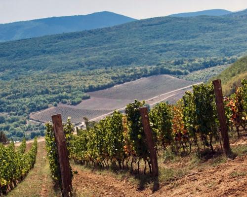 Отечественное производство виноделия