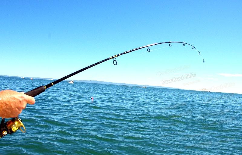 рейтинг 8 лучших лесок для рыбалки