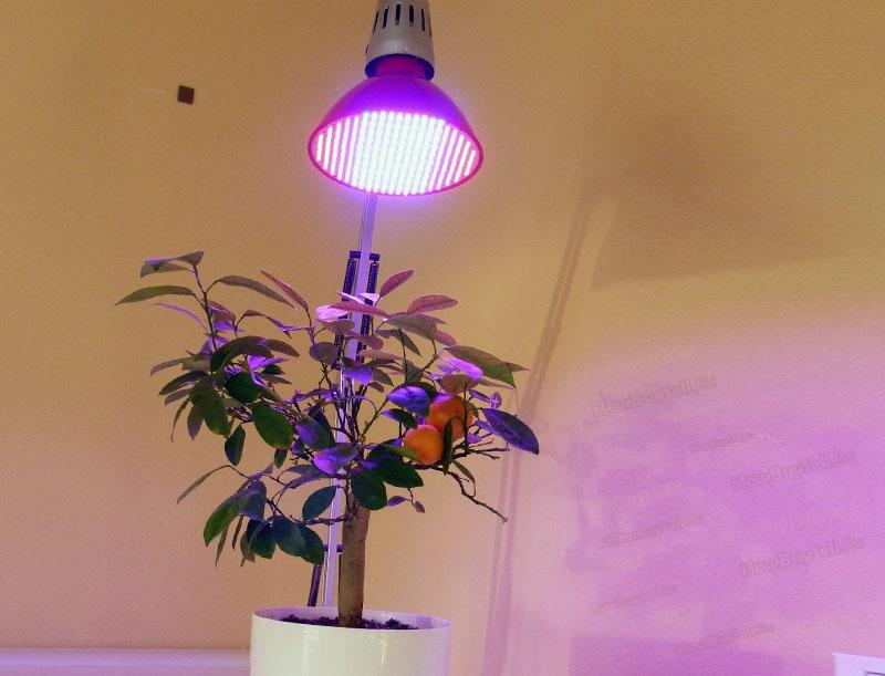 Как выбрать фито-лампу для домашних растений