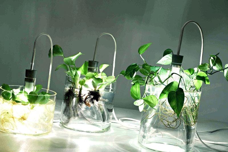 Какие лампы для рассады лучше, по мнению агрономов